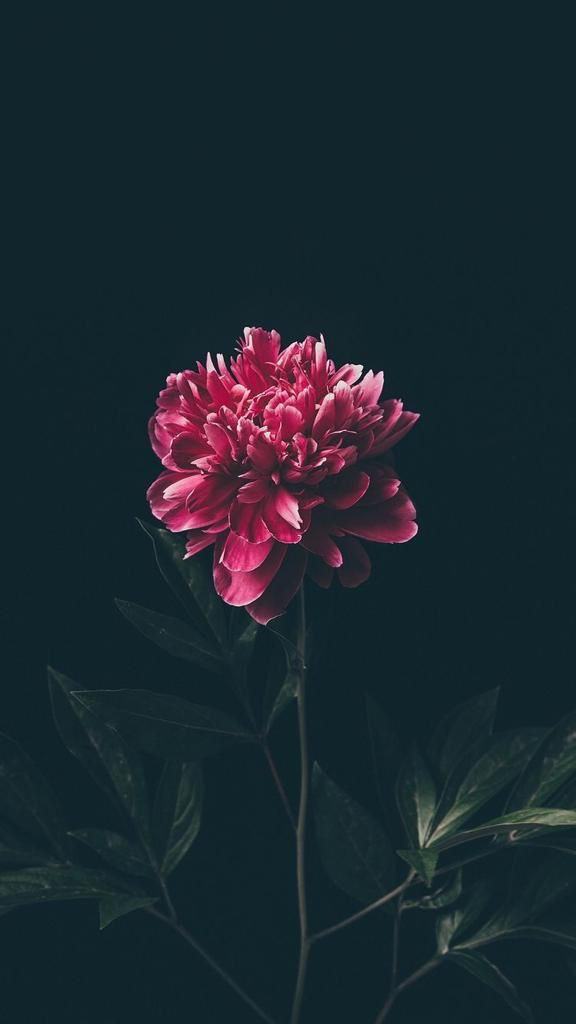 Floral | Flower | Wallpapers | iPhone | Android