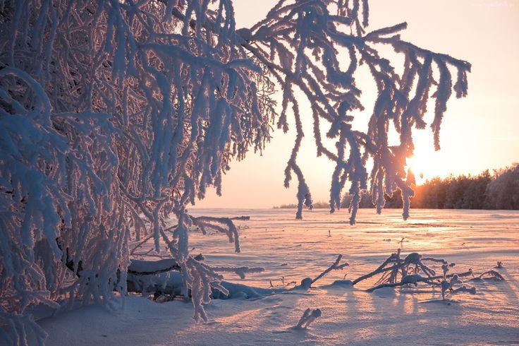 Krzewy, Szadź, Zamarznięte, Jezioro, Słońce