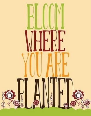 Good advice: Sayings, Inspiration, Quotes, Favorite Quote, Wisdom, Bloom, You Are