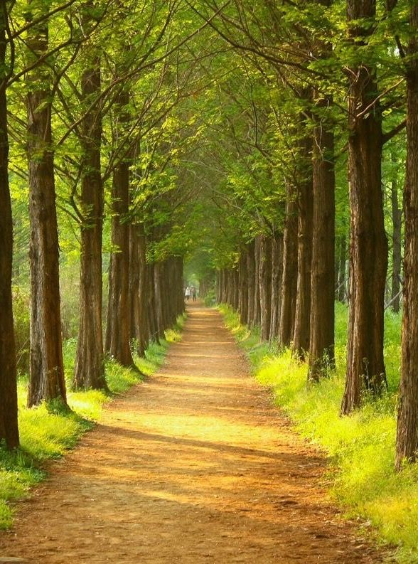 ***A walkway in the forest (Seoul, South Korea) by H.R AN