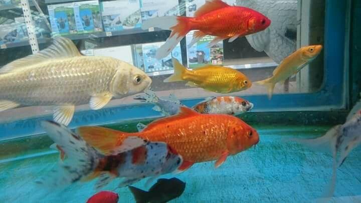 Les 15 meilleures images propos de jardiland lanester for Jardiland bassin poisson