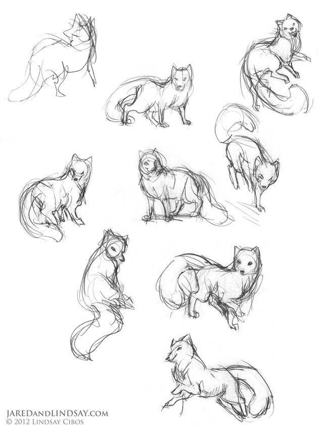 Fox Face Line Drawing : Fox animal poses the last of polar bears how to