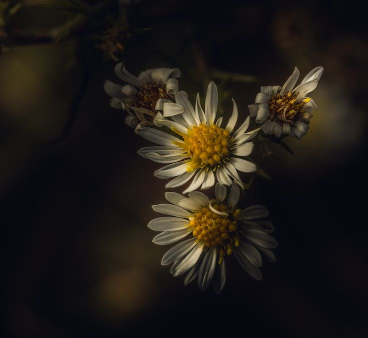 In My Time Of Dying by Paul Barson #daisy