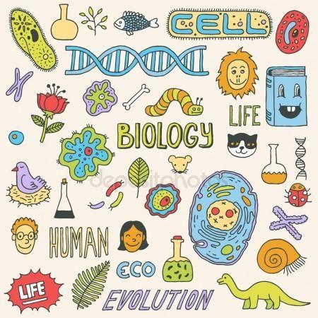 Scarabocchi di biologia. illustrazione a mano