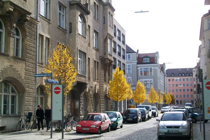 Horse chestnuts (Aesculus hippocastanum) are brilliantly yellow along museum row near the Technische Universität München.  A row of street trees in the neighborhood near the Theresienstr. U-Bahn (subway) station are not to be outdone.