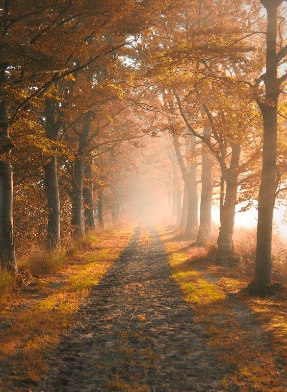 Misty autumn morning (Netherlands) by Jeroen van Wijngaarden