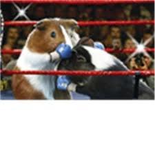 guinea pig olympics - Google Search