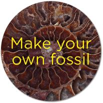 #Science experiment for #kids: make your own fossil