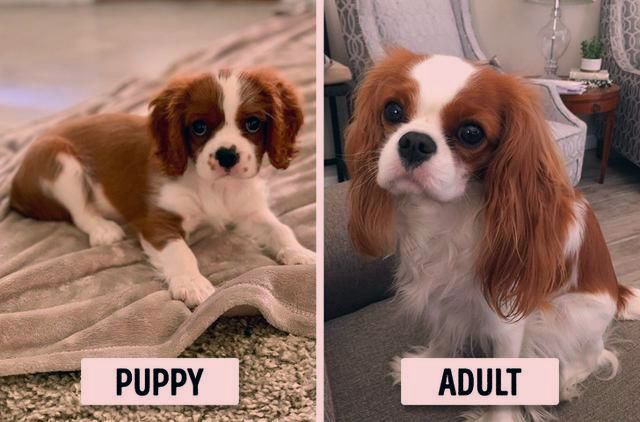 Tiny Dog Breeds Breeds Puppies Dog Breeds That Dont Shed Dog Breeds Medium Dog Breeds Large Beautiful Dog In 2020 Tiny Dog Breeds Cute Dogs Images Funny Animals