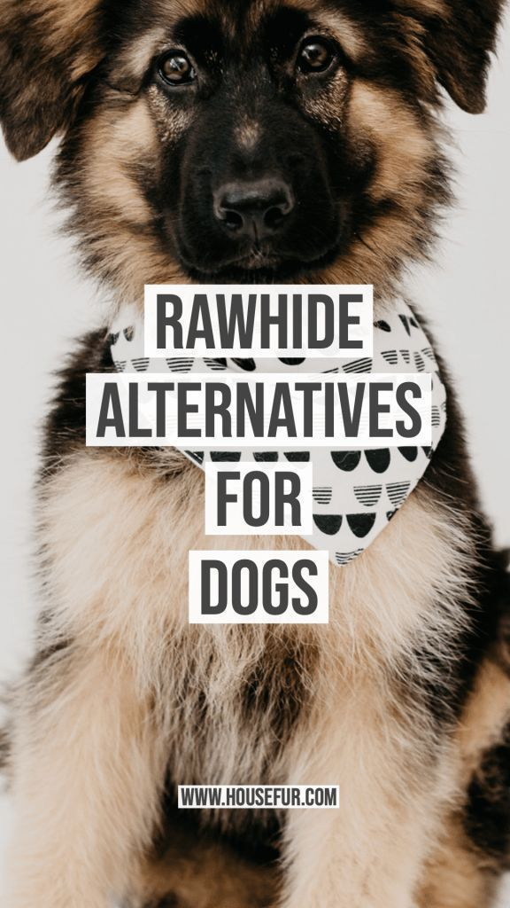 No Rawhides For My Dogs Dogs Dog Chews Coconut Oil For Dogs