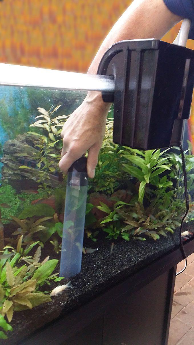 Juwel aqua clean aquarium fish tank gravel - 25 Best Ideas About Aquarium Maintenance On Pinterest Aquarium Ideas Fish Tanks And Freshwater Aquarium