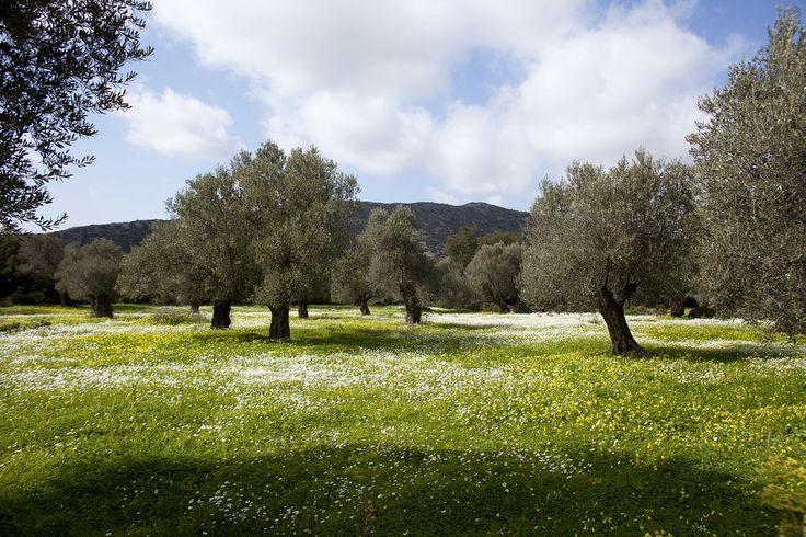 Peeling back the layers of Naxos Greece