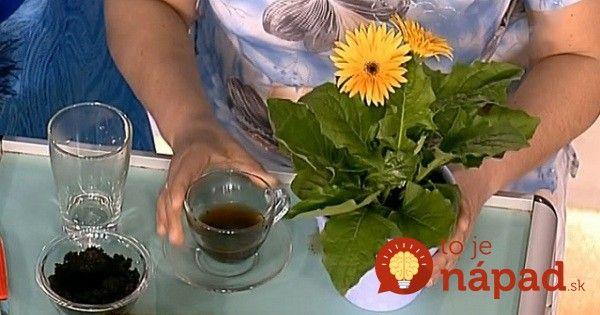 Chcete, aby vaše kvety žiarili farbami? Stavte na domáce prírodné hnojivo!