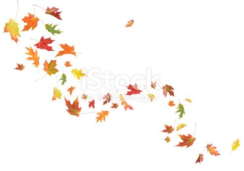 Image result for Images for depicting withering leaves of Mayflower tree