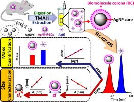 Simultaneous size characterization and mass quantification of the in vivo core-biocorona structure and dissolved species of silver nanoparticles