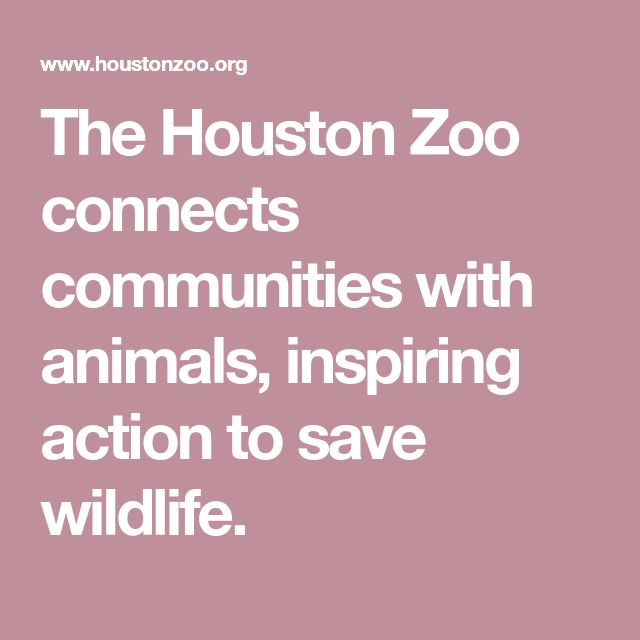 The Houston Zoo connects communities with animals, inspiring action to save wildlife.