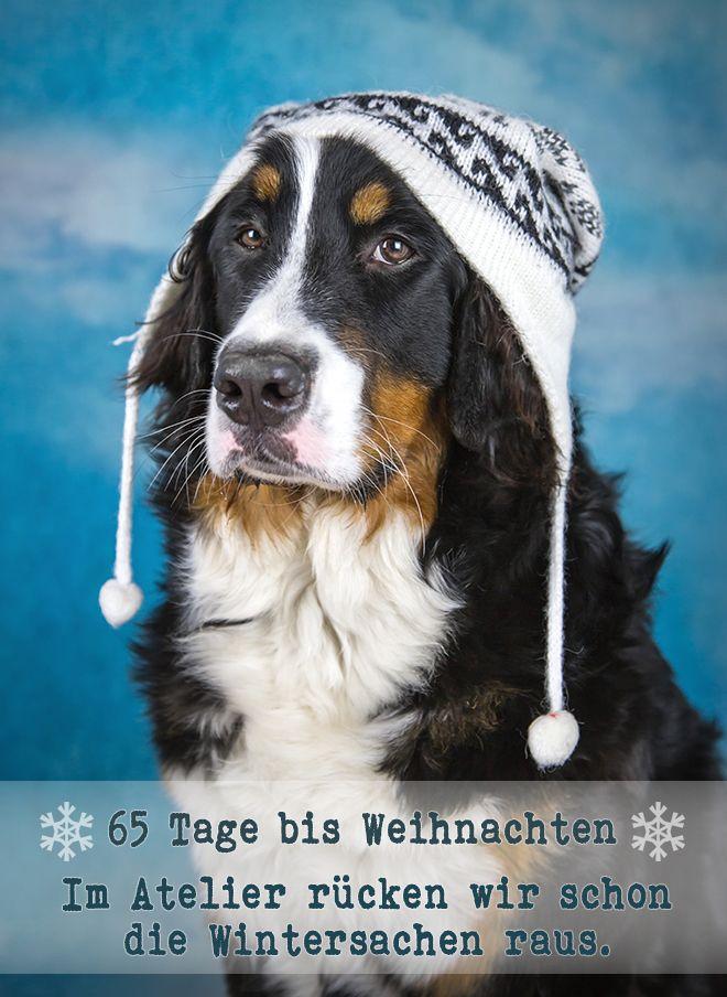 Sunny Von Bayern Berner Sennenhund Sennenhund Hunde