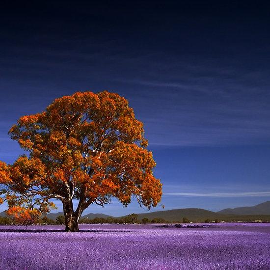 ~~Fantasy tree ~ Grampians, Victoria, Australia by Neville Jones~~