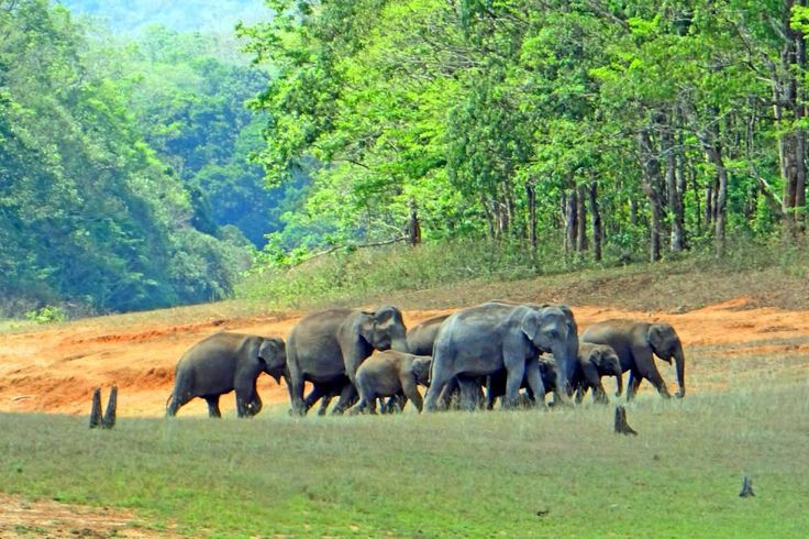 Periyar National Park WILDLIFE in Kerala | HappyTrips.com