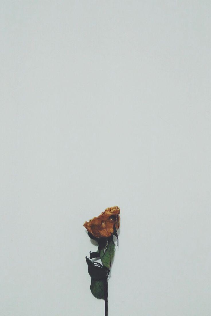 Kenapa bunga begitu cepat layu, ketika aku coba melupakanmu.