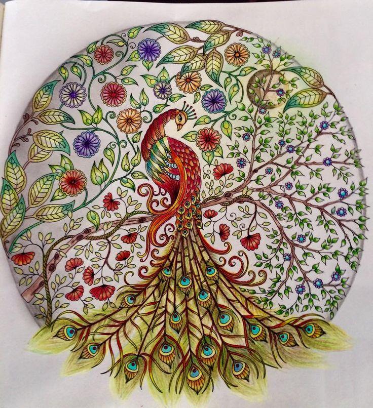Pavo Jardim Secreto Autor Desconhecido Peacock ColorsAdult ColoringColoring BooksColouringDoodle DrawingsPaonsJohanna Basford Secret GardenArt
