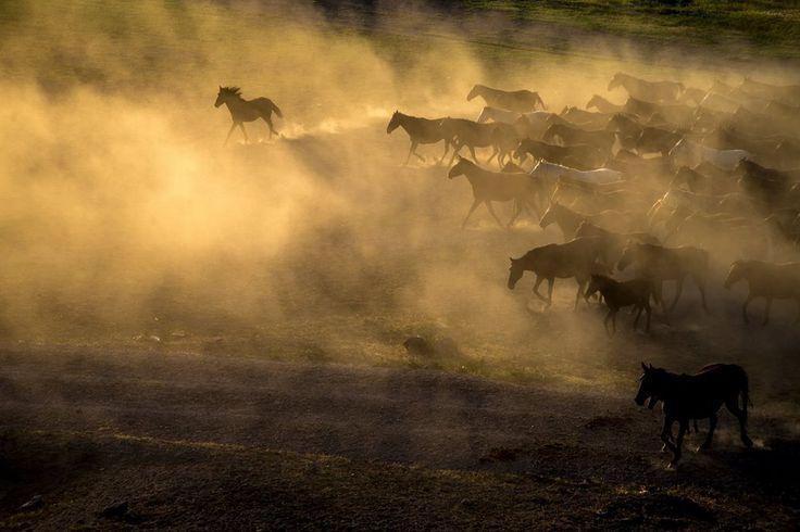 Kayseri - Yılkı Atları   Fotoğraf: Uğur Yıldız