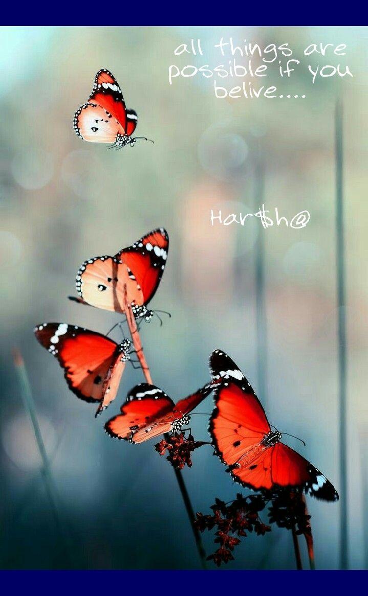 Butterflies Encouragements Of Images A Gamer Hookup Adult Swim