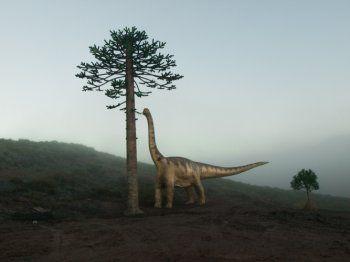 Reconstrucción de una araucaria de 10 metros de altura y saurópodo de 12 metros de longitud en Igea (La Rioja)