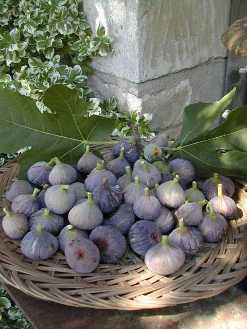 La Pouyette....: First September Weekend figs are perfect for jam, chutney or drying