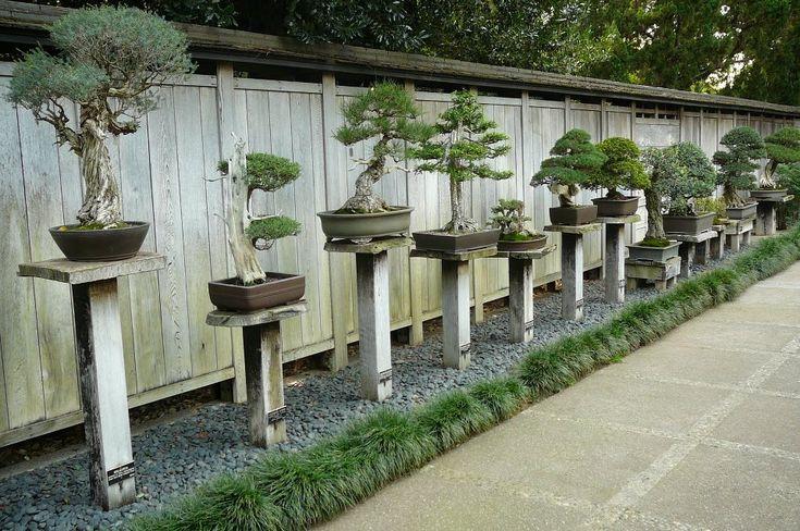 bonsai garden Nice, but no cover . . .