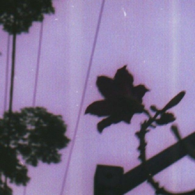 Saudades filme vencido e câmeras analógicas da Belas Artes #NoFilter #analogy