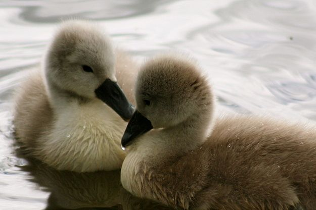 Flapper. | Community Post: The Definitive Ranking Of Baby Animal Names, By Cuteness