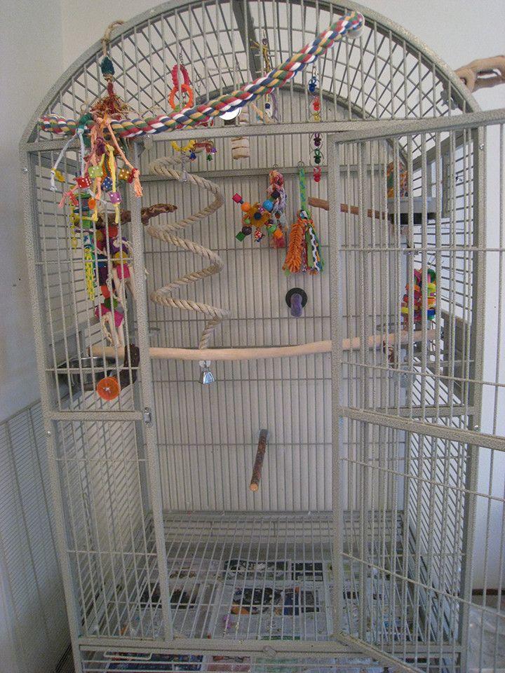 macaw cage setup