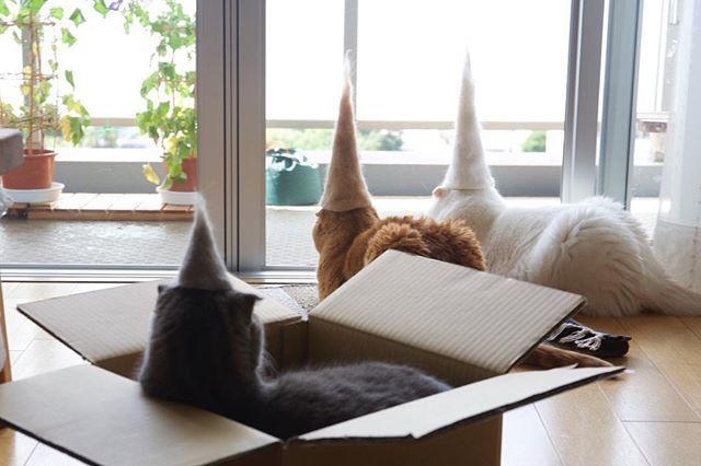 本日の抜け毛山連峰🗻 ムギ山の世界遺産登録を阻むマル山の追い上げが凄い✨ #換毛期 #世界遺産 #抜け毛山連峰 #抜け毛サロン #抜け毛貯金 #コーンヘッズ At this stage,it seems Mt.Maru is as tall as Mt.Mugi🗻 #cat #scottishfold #neko #catstagram #catsofinstagram #catlover #instacat #gato #chat #猫 #ねこ #ネコ #ふわまもこ部 #もふもふ #スコティッシュフォールド #キジネコ #キジトラ #白猫 #しろねこ #茶トラ