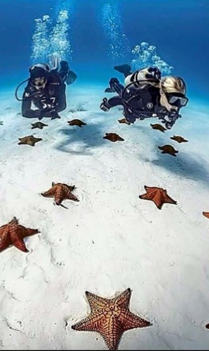 The reason there are no stars in the sky during the day! They're resting here… http://divingtales.com