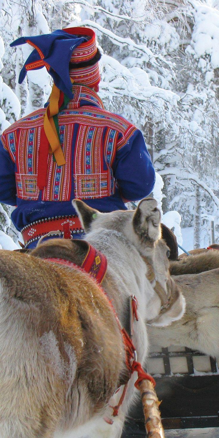 Reindeer in Norway.