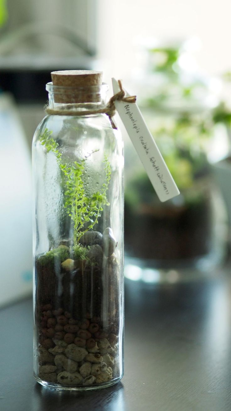 Closed System Terrarium  Glass Gardens  Pinterest  Terraria, Plants And  Gardens