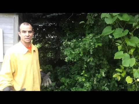 Poison Ivy Removal Tips to do it yourself. - YouTube