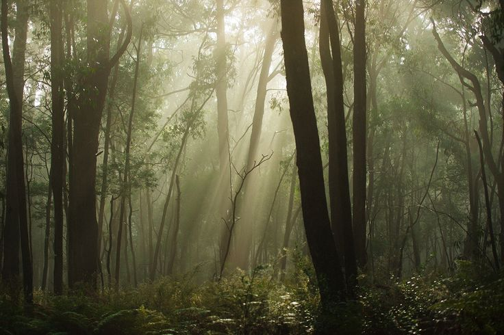 Morning fog through the trees by Jaccob McKay