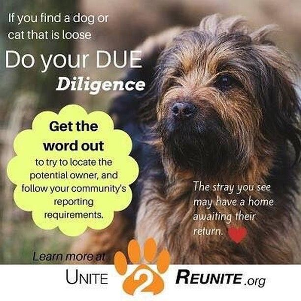 If You Or A Friend Found A Lost Dog This Weekend Please Be Sure To Do Your Due Diligence Remember Not All Stray