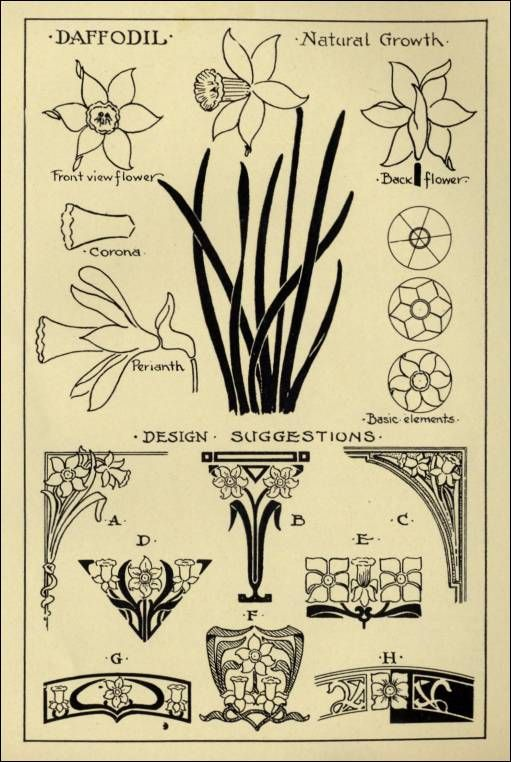 """Daffodil Patterns in """"Monumental Drawing and Lettering: The Daffodil in Applied Ornament"""" (1926)"""