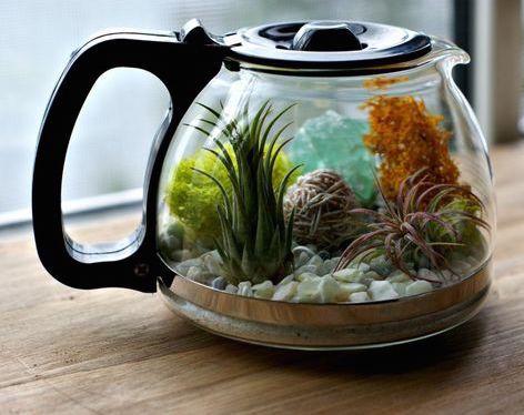 Anything can be a terrarium if you try hard enough! Repurpose a coffee pot into a succulent terrarium, upcycle crafts, DIY garden decor idea.