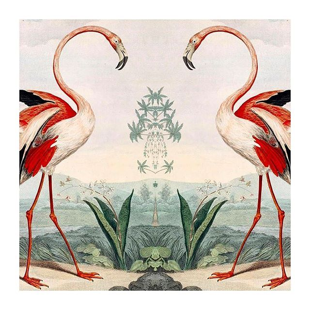 Exotic vibes🌴 🌴 💕 🌿 🌿  Musei Leveriani Explicatio, Anblica et Latina (1792-96), by George Shaw  #PaulaCademartori #Paulaloves #painting #birds #flamingo #pinkeverything #inspiration #animal #spring #elegance #love #mondaymood #art #pinkeverything #science