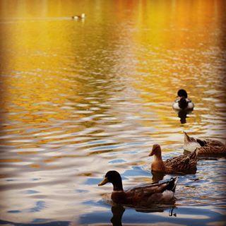 自然の中で思い切り遊べる「塩沢湖」☆ 軽井沢の見所まとめ。