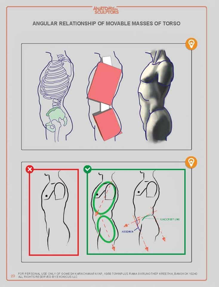 Beste Anatomie Ausrichtung Und Richtungsbegriffe Ideen - Anatomie ...