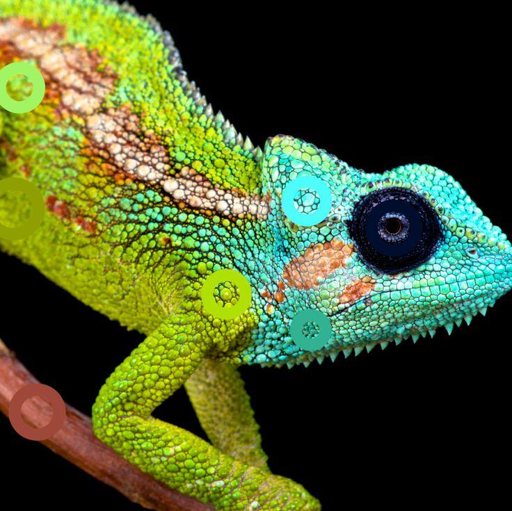 Blending In #chameleon #blue #green #navy #nature #bright