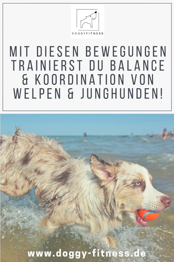 Bewegung Von Welpen Junghund Ubungen Fur Balance Koordination Welpen Junghund Hunde