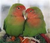Love birds...sit'n on a Ladybug Wreath!