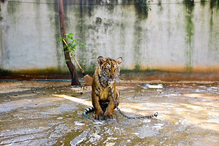Holiday Horror Show: animals suffering for tourists' entertainment