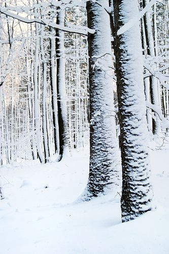 winter in the Franconia forest, Bavaria, Germany